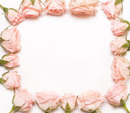 Frame of pink flowers on white background. Royalty Free Stock Images