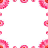 Frame Pink Gerbera Flowers Stock Photos