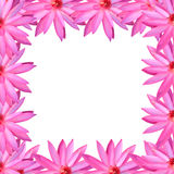 Frame pink lotus isolated on white background. Frame pink lotus isolated on white background for design in concept of nature Stock Images