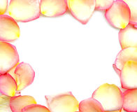 Frame of pink pastel rose petals on white background. Valentine's Day, anniversary etc background.  stock image