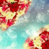 Frame of pink poinsettia flower or christmas star Stock Image