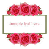 Frame with pink rose flowers Royalty Free Stock Photos