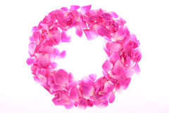 Frame of pink rose petals Stock Images