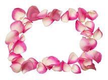 Frame from pink rose petals. Isolated on white background. Top view. Flat lay stock photo