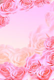Frame of pink roses Stock Photography