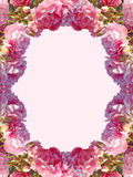 The frame of pink roses Royalty Free Stock Photos