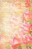 Frame from pink roses grunge. Frame from pink roses is insulated grunge Royalty Free Stock Photo