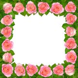 Frame with Pink roses. Isolated on white background. Frame with Pink roses. Isolated on white background Royalty Free Stock Photography