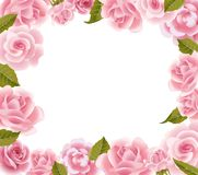 Frame from pink roses Royalty Free Stock Images