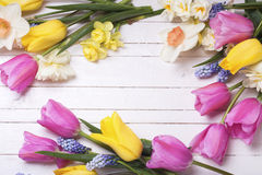 Frame from pink, yellow, white and blue spring tulips and daff. Odils flowers on white wooden background. Selective focus. Place for text stock images