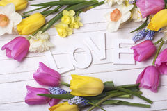 Frame from pink, yellow, white and blue spring tulips and daff. Odils flowers and word love on white wooden background. Selective focus royalty free stock photography
