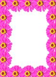 Frame from Pink Zinnia Flower Royalty Free Stock Photography