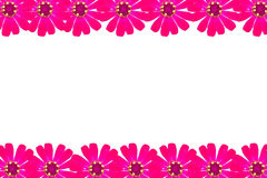 Frame pink zinnia Royalty Free Stock Photo