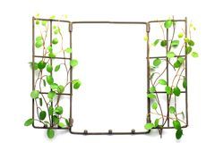 Frame of the plant Royalty Free Stock Image