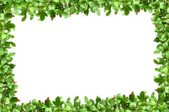 Frame with plants Royalty Free Stock Photo