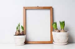 Frame and plants. Hyacinth and narcissus sprouts in ceramic pots and empty wooden frame on a white wall Stock Photography