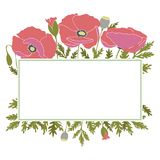 Frame with poppy flowers Royalty Free Stock Photo