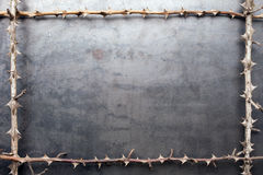 Frame from prickly dry branches on metal texture Stock Image