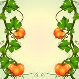 Frame of pumpkins Stock Images
