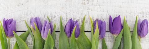 Frame of purpleviolet tulips on white rustic wooden background royalty free stock images