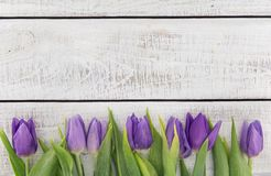 Frame of purpleviolet tulips on white rustic wooden background Royalty Free Stock Photo