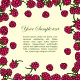 Frame of raspberries Royalty Free Stock Photo