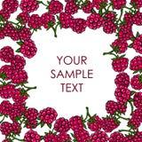 Frame of raspberries Stock Photo