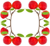 Frame of red apples Stock Photo