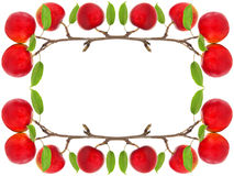 Frame of red apples Royalty Free Stock Images