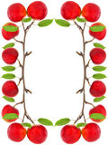 Frame of red apples Royalty Free Stock Photo