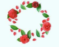 Frame of red Camellia flowers, leaves and red petals on light cy Stock Photo