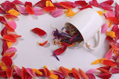 Frame from red flower petals Stock Photo