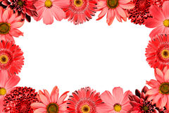 Frame with red flowers collage mix gerbera, chrysanthemum, dahlia, primula, decorative sunflower isolated on white royalty free stock photography