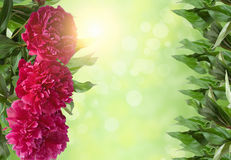 Frame of red flowers and green leaves on a green background Stock Photo