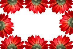 Frame of red flowers isolated Royalty Free Stock Photos