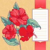Frame with red hibiscus Royalty Free Stock Photos