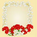 Frame with red hibiscus and jasmine vector Stock Images