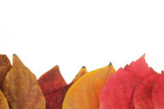 Frame of red leaves yellow. Red and yellow leaves off the trees in a white background Royalty Free Stock Photo