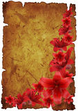 Frame from red lily Royalty Free Stock Photos
