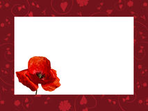 Frame with red poppy Royalty Free Stock Photos