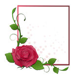 Frame with red rose Stock Photo