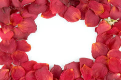 Frame from red rose petals. And one bud Royalty Free Stock Image