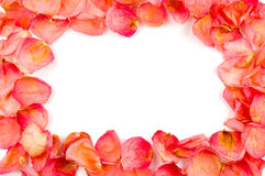 Frame from red rose petals. Over white background Stock Images