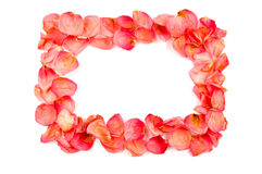 Frame from red rose petals. Over white background Royalty Free Stock Photo