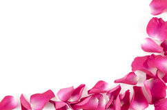 Frame of red rose petals on white background Stock Image