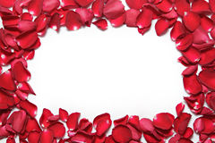 Frame of red rose petals on white background. Valentine's Day, anniversary etc background. Stock Images