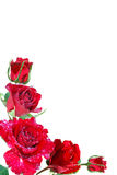 Frame from red roses Royalty Free Stock Photo