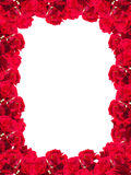 The frame of red roses Royalty Free Stock Images
