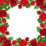 Frame with red roses and green leaves. Vector illustration. Royalty Free Stock Photography