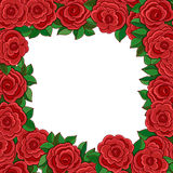 Frame of red roses isolated on white background Stock Photos